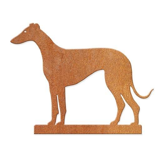 Windhund - stehend