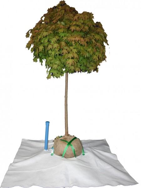 Baumbefestigung-/bewässerung TIS-Roof